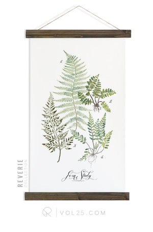 Fern Study Vol.1 | Reverie Collection Scientific Canvas Wall hanging | more options VPR08 - vol25