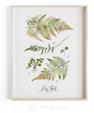 Fern Study vol2 | Textured Cotton Canvas Art Print  | VOL25