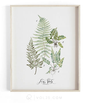 Fern Study Vol.1 | Scientific Cotton Canvas Art Print | VOL25