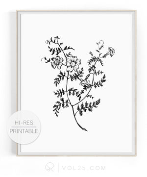 Foxgloves | High quality Large scale printable art