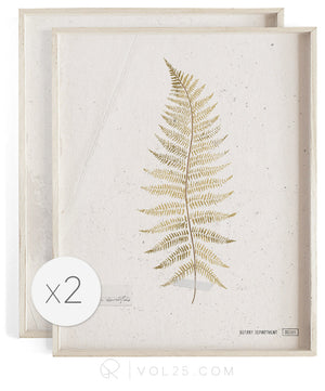 Fern Studies Golden | Curated Art Set | 2 Textured Cotton Canvas Art Prints | VOL25