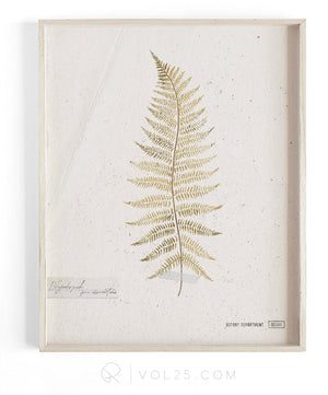 Golden Fern Study vol.1 | Textured Cotton Canvas Art Print, several sizes | VOL25