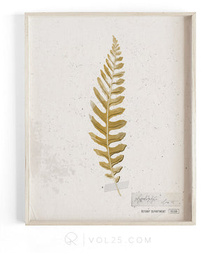 Golden Fern Study vol.2 | Textured Cotton Canvas Art Print, several sizes | VOL25