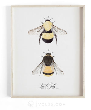 Insect Study Bumble Bee | Scientific Textured Cotton Canvas Art Print | VOL25