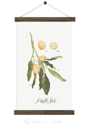 Kumquat Study vol.1 | Canvas Wall Hanging | More options