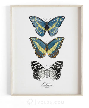 Lepidoptera Study Vol.2 | Scientific Textured Cotton Canvas Art Print | VOL25