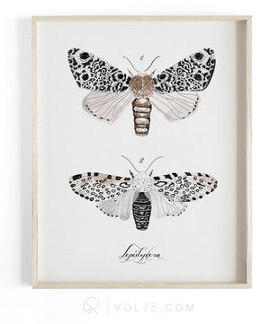 Lepidoptera Study Vol.3 | Scientific Cotton Canvas Art Print | VOL25