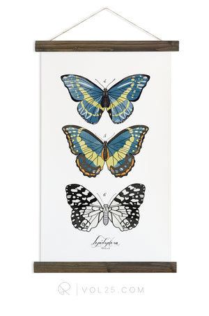 Lepidoptera Study Vol.2 | Scientific Canvas Wall hanging | more options VPL201 - vol25