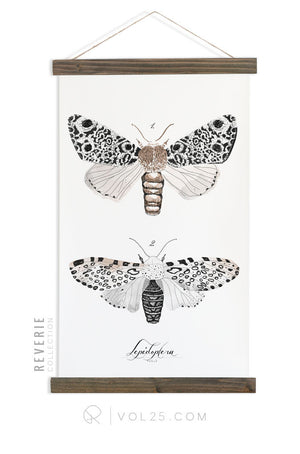 Lepidoptera Study Vol.3 | Reverie Collection Scientific Canvas Wall hanging | more options VPR09 - vol25