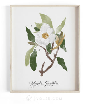 Magnolia Study | Textured Cotton Canvas Art Print, 10 sizes | VOL25