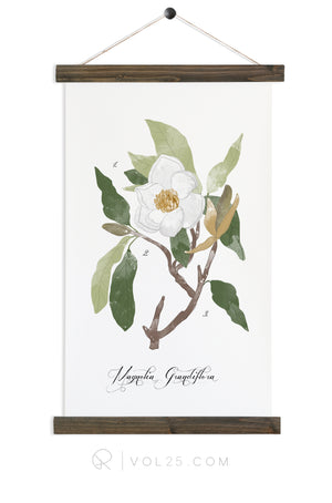 Magnolia Study | unique wall hanging art | More options