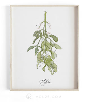 Mistletoe Study | Textured Cotton Canvas Art Print | VOL25