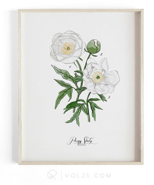 Peony Study White | Scientific Textured Cotton Canvas Art Print | VOL25