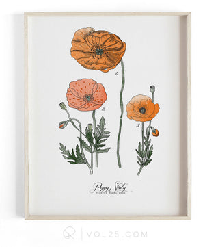 Poppy Study Vol.1 | Scientific Textured Cotton Canvas Art Print | VOL25