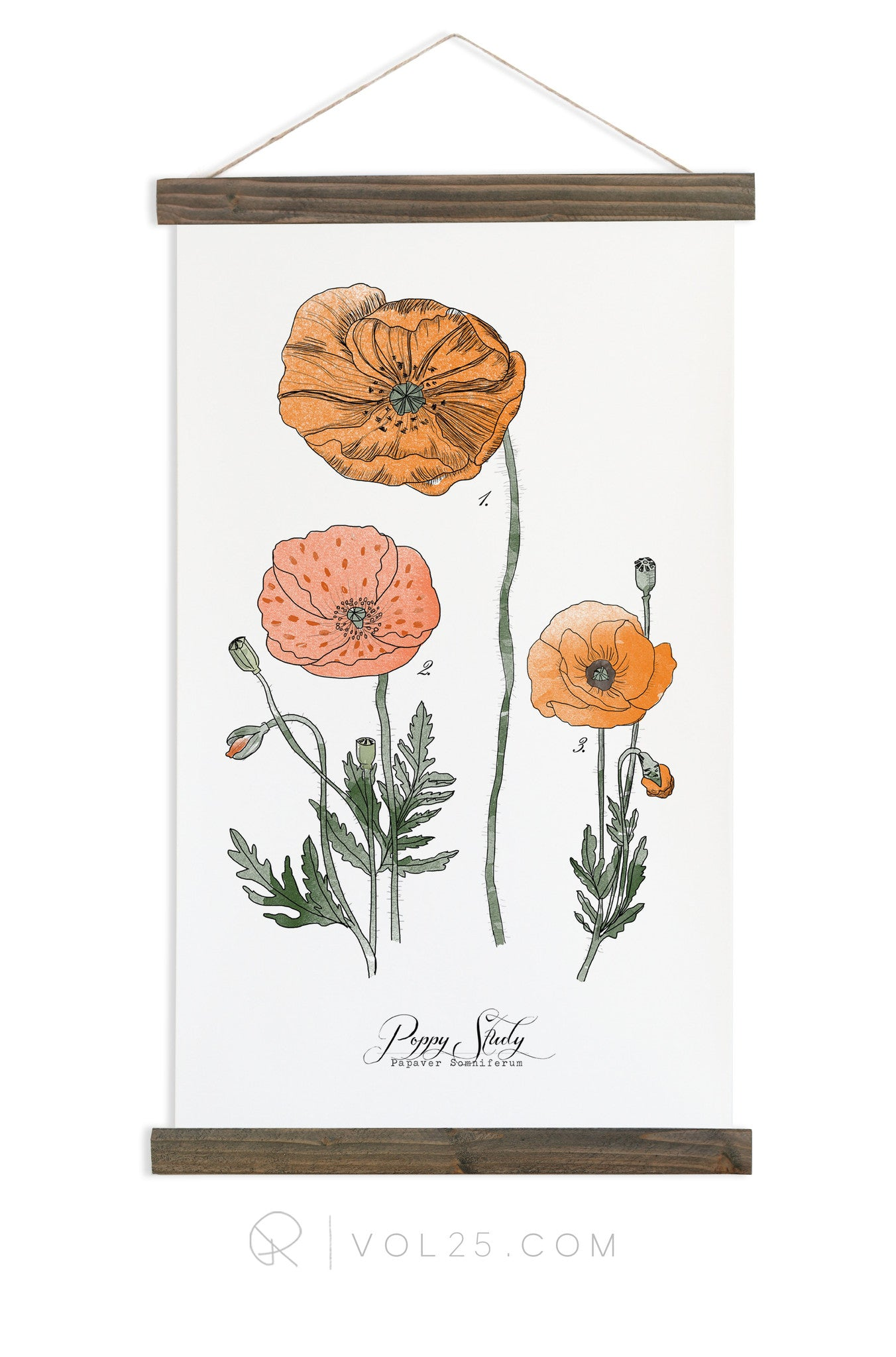 Poppy Study Vol1 Scientific Canvas Wall Hanging More Options