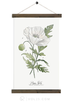 Poppy Study | unique wall hanging art | more options