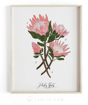 Protea Study | Textured Cotton Canvas Art Print  | VOL25
