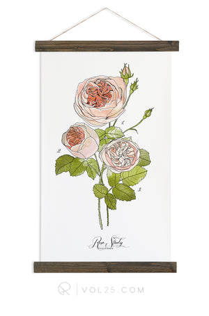 Rose Study Vol.1 | Scientific Canvas Wall hanging | more options VPB401 - vol25
