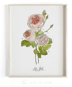 Rose Study Vol.1 | Scientific Textured Cotton Canvas Art Print VOL25