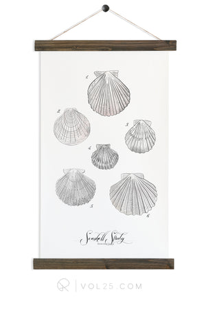 Seashell Study Vol.2 | Canvas Wall hanging | more options