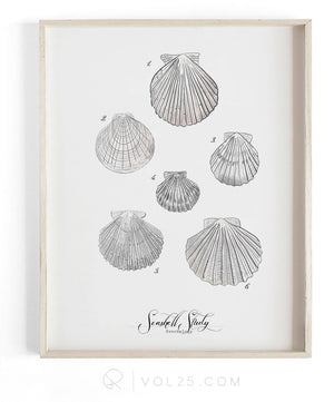 Seashell Study Vol.2 | Textured Cotton Canvas Art Print, 9 sizes | VOL25