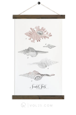 Seashell Study Vol.1 | Canvas Wall hanging | more options