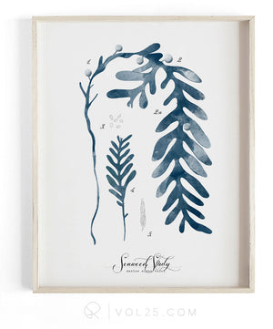 Seaweed Study vol1 | Unique Art Decor 9 sizes | VOL25