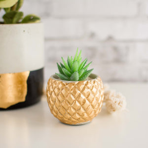 The Pineapple Planter