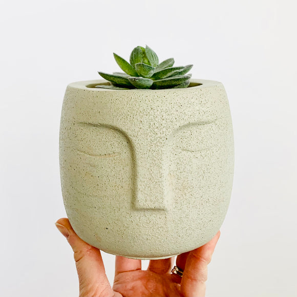 The Queen Planter - Natural Concrete