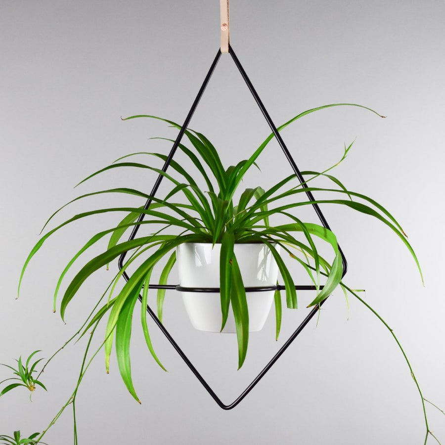 Fernie - Plant Stands - By plantwares™