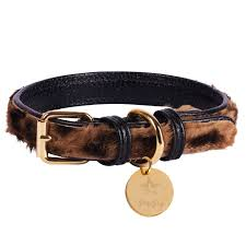 POISE PUP LEATHER COLLAR WILDEST ONE