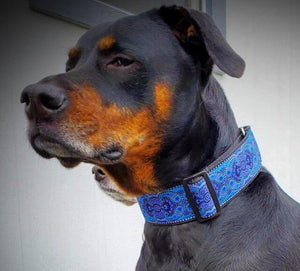 DIVA DOG KASHMIR PEACOCK BLUE EXTRA WIDE MARTINGALE COLLAR