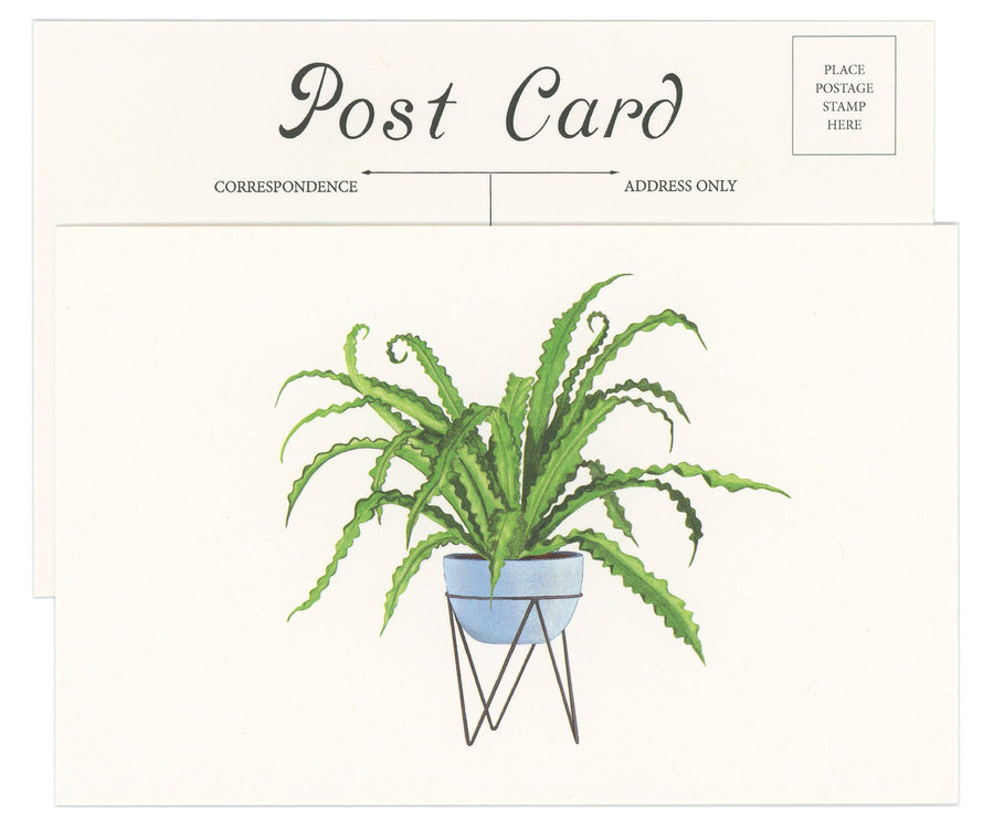 Bird's Nest Fern Postcard