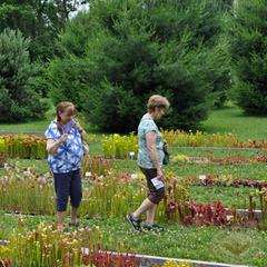 Carnivorous Plant Nursery Open House June 2015 3