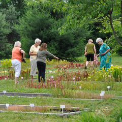 Carnivorous Plant Nursery Open House June 2015 7