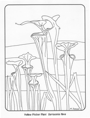 coloring page: pitcher plant