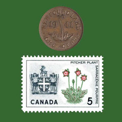 Newfoundland S. purpurea penny and stamp