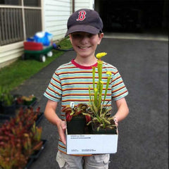 10-year-old Spencer Ricketts is very excited about his new carnivorous plants from Carnivorous Plant Nursery.
