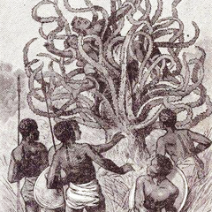 Man Eating Tree of Madagascar