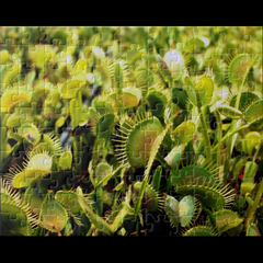vft.puzzle.2000a.png