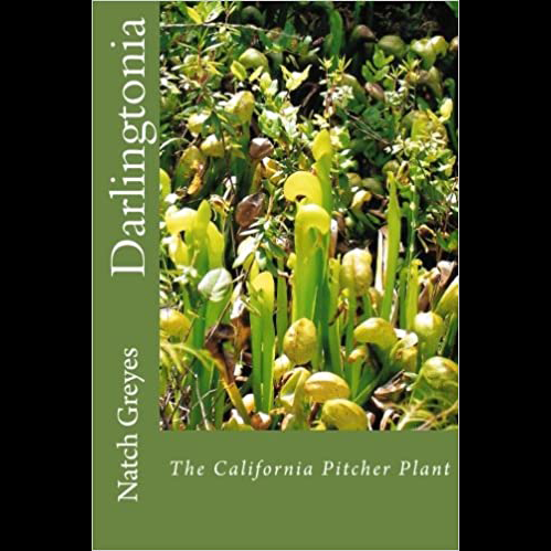 Darlingtonia by Natch Greyes