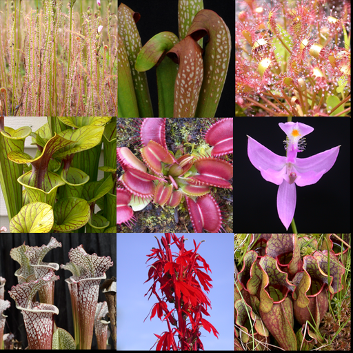 Carnivorous Plant Mix Seeds