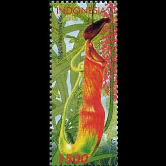Carnivorous Plant Stamps - Indonesia
