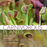 Gardening with Carnivorous Plants