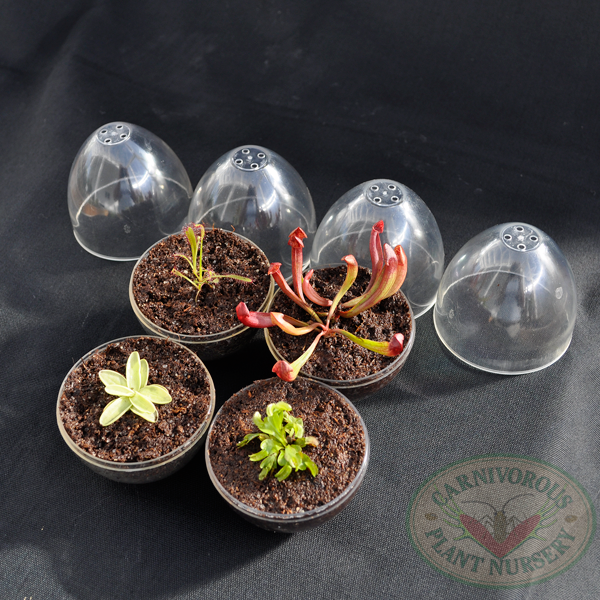 Mini-egg Terrarium with Carnivorous Plant