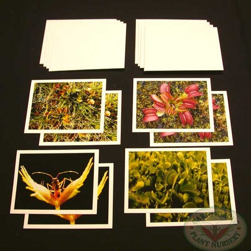 Carnivorous Plant Note Cards
