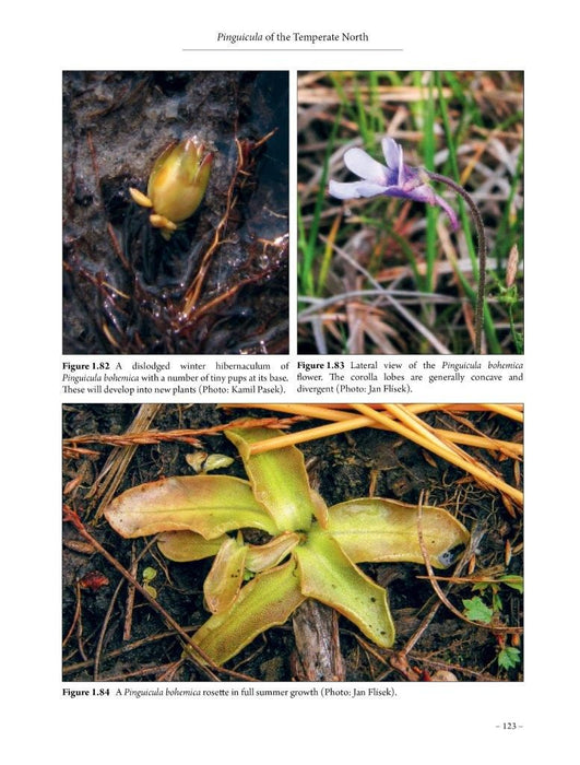 Pinguicula of the Temperate North By Aymeric Roccia, Oliver Gluch, Stan Lampard & 6 more