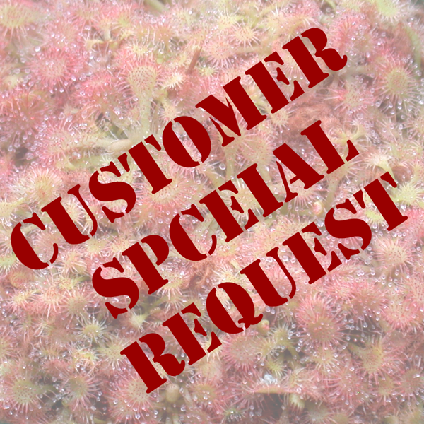 Customer Special Request
