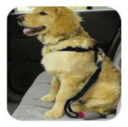 Dog Car Harness and Seat Belt - Extra Small