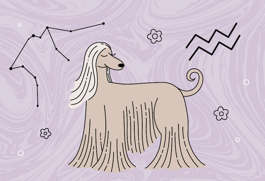 A Valentine's Day horoscope reading for your dog